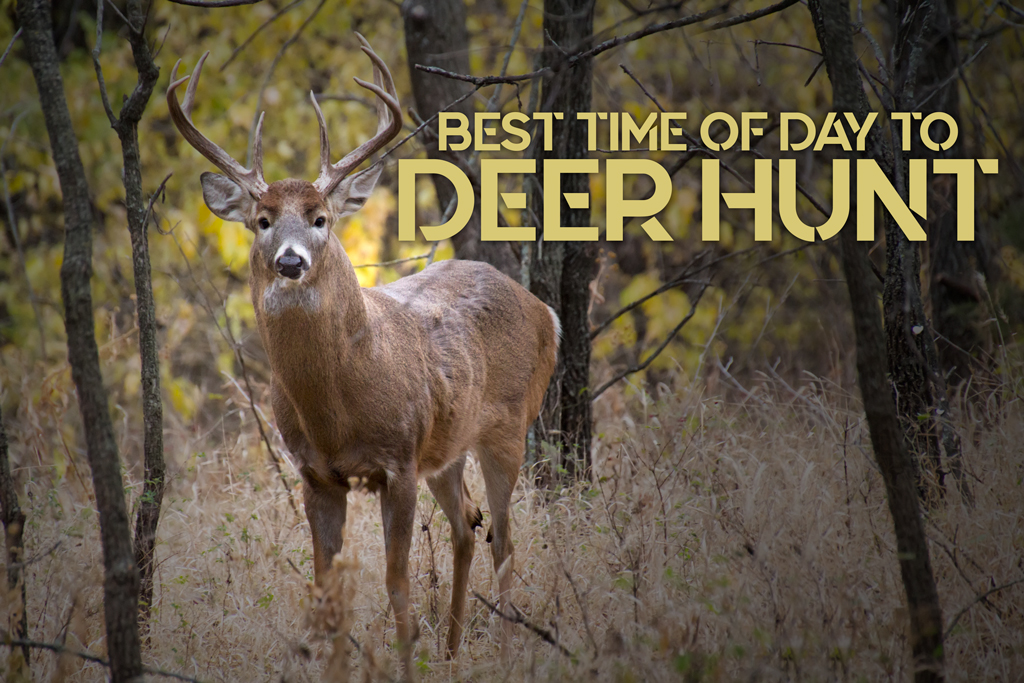 a photo of the Best Time of Day to Hunt Deer